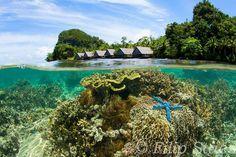 Pulau Pef, Raja Ampat ... Photo:Filip Staes (aka Leonardo of the Oceans)
