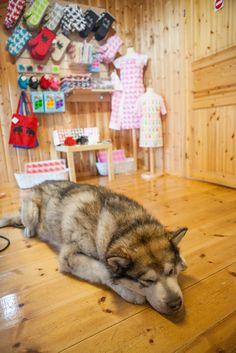 A dog in #Honningsva