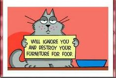 Haha!!! True cat humor. #cat #humor #cats #funny =^..^= www.zazzle.com/kittyprettygifts