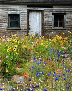 I want these flowers in front of my cabin!