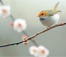 spring bird, orang, feather, blossom