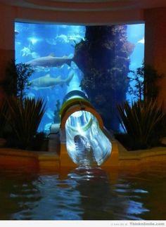 Waterslide Through an Aquarium
