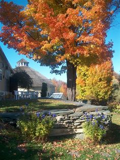 Fall leaves at Inn at the Round Barn Farm - Waitsfield, VT