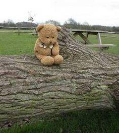 Teddy Bear   #parcellesdelune #teddy #ourson #bear
