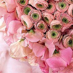 one of my favorite flowers...ranunculus