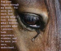 Horses truly are very sensitive creatures - we have to learn to listen to them like they listen to us...