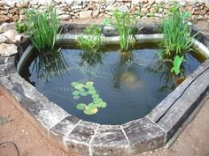 Ideas de estanques