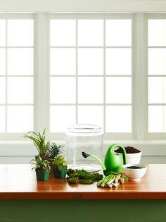 Materials to create a terrarium