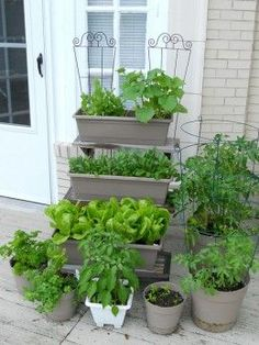 shade-loving veggies for containers (salad leaves, rocket, spinach beet, runner beans, spring onions, carrots)