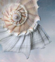 spiral..