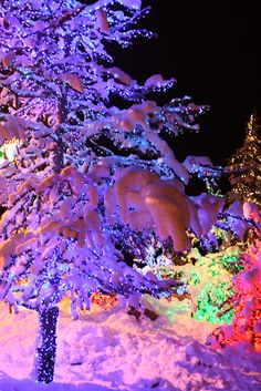 Holiday lights and snow