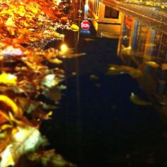 Fall, in a puddle