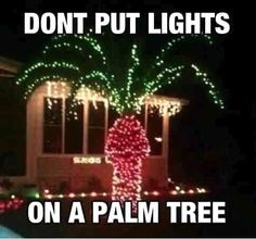 Funny jokes, Lmao quotes, jokes quotes, funny pictures, funniest thing ever, Omg hilarious  …For the funniest pictures and jokes funny visit www.bestfunnyjokes4u.com/rofl-best-funny-joke-pic/ palm tree, funny humor, white lights, florida, christmas decorations, christmas lights, funniest pictures, funniest ever, christmas trees