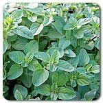 herb seed, organ seed, organ herb
