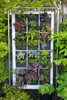 Ferns, strawberries, heuchera, euonymous, grasses, moss and a variety of succulents are just a few things that are included in the above vertical gardens. Awesome, I love it