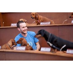 sausage dogs ruling the world