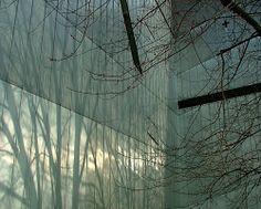 Trees reflection on Facade