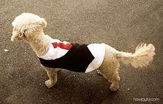 DIY Pet Vest. Yes.