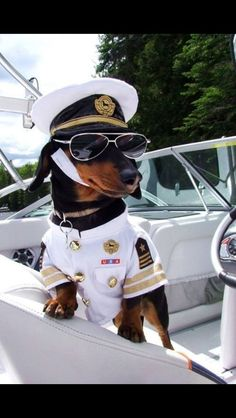 Captain Doxie