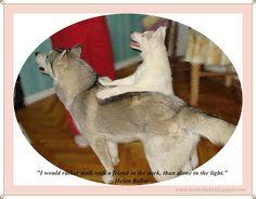 Funny husky pictures, siberian husky, husky puppies