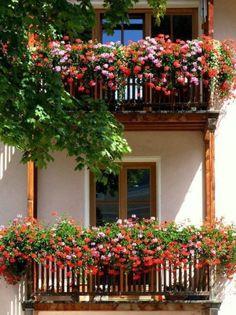 roof, terrac, potted plants, window box, flower balconi