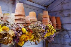 Pots and dried flowers