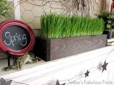 Rustic Wood Planter with Wheatgrass from Today's Fabulous Finds | Featured in Gooseberry Patch Fresh Picked Inspiration slideshow