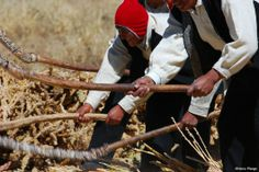 Andean countries committed to family farming - Member countries of the Andean Parliament approve laws and policies to promote the International Year of Family Farming.