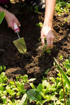 Tips to Control Garden Pests