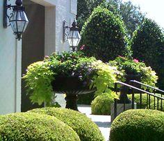 nice urns and lights, sculpted shrubs, Fowlkes, Norman & Associates