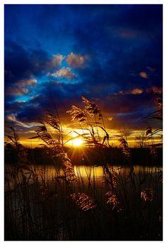 Sunset through fields... stunning color