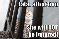 Fatal Attraction  starring Luna the fashion kitty.   She will NOT be ignored!