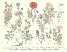 "wild flowers    illustrated by Margaret Tournour, ""Yafflewood: A Village Nature Book"", Geoffrey Cumberlege Oxford University Press, 1949."
