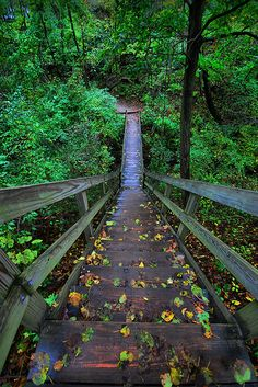 Starved Rock Stairs - Starved Rock State Park, IL