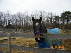 "This horse came right up to see me...I believe I heard him say ""please, get me outta here...please""...it was so sad..."