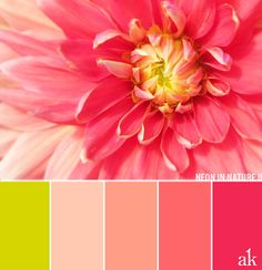 a dahlia-inspired color palette // chartreuse, peach, coral, neon pink