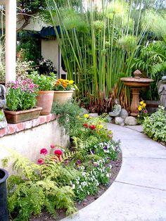 Tropical looking garden path