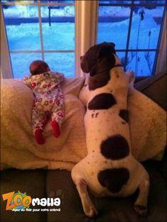 #bebe et #chien gardent la maison ^^ http://www.zoomalia.com