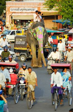 In India's streets...Anything goes