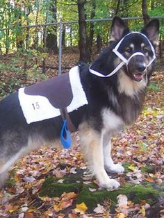 User-Submitted Halloween Pet Costumes : Decorating : Home & Garden Television