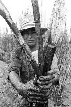 3/9  La mayoría malviven hacinados en pequeñas parcelas de tierra rodeadas de haciendas de ganado y de extensos cultivos de soja y caña de azúcar. Algunos hasta carecen de estos diminutos terruños y se ven forzados a acampar en los bordes de carreteras y caminos. Su fuerza en número -con unos 46.000 integrantes, son el pueblo indígena más numeroso de Brasil- no ha sido suficiente para evitar su despojo.
