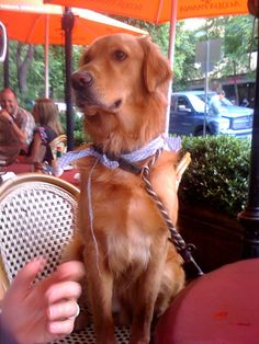 Dog-friendly Restaurants in Austin    http://www.realtyaustin.com/blog/austin-dog-friendly-and-doggone-cool.html