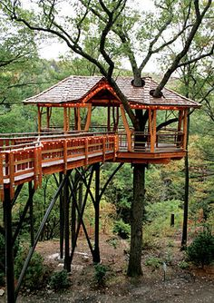 Scranton Treehouse: Scranton, Pa.  Everyone should have access to a treehouse! At least that's what the people behind tree houses, branch, trees, scranton treehous, tree patio, patios, homes, people, live