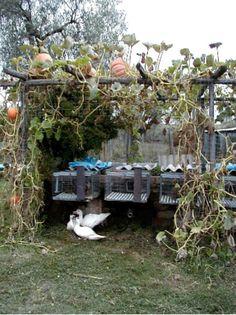 permaculture rabbit