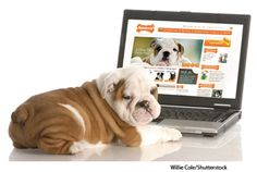 Dog & Computer From Nylabone:)