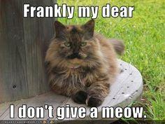 Rhett Butler cat