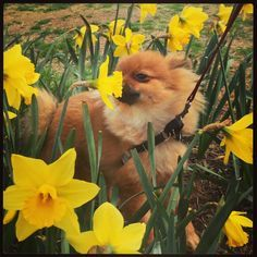 Even pups enjoy the Spring flowers