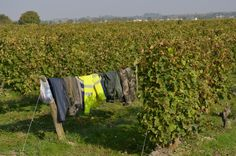 Harvesters Clothes Line