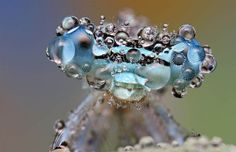 Insect covered in dew moments after a downpour