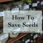How to Save Seeds to Regrow Vegetables - The Homestead Survival - Homesteading